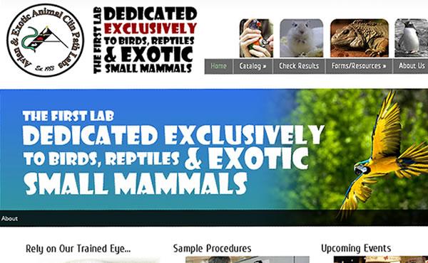 veterinarian-website  in dayton ohio